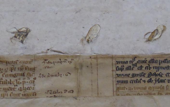Colchester Harsnett H.f.24 ii